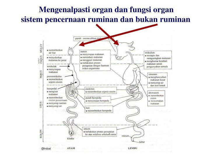 Mengenalpasti organ dan fungsi organ