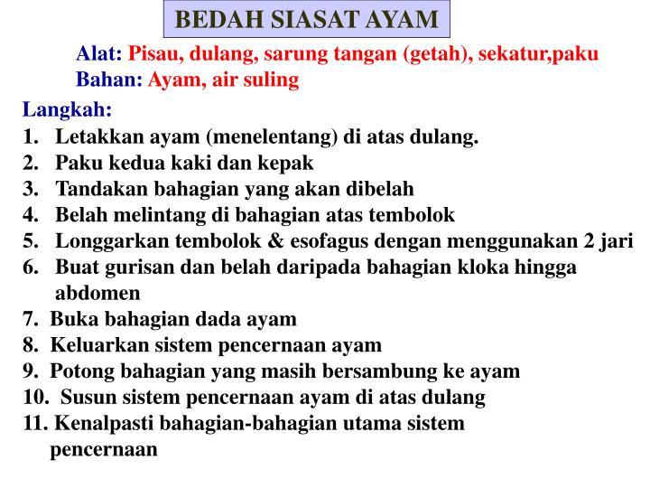 BEDAH SIASAT AYAM