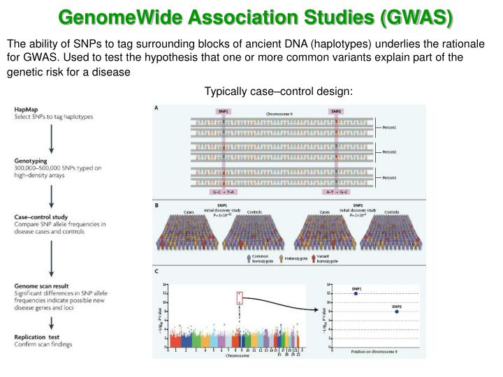 GenomeWide Association Studies (GWAS)