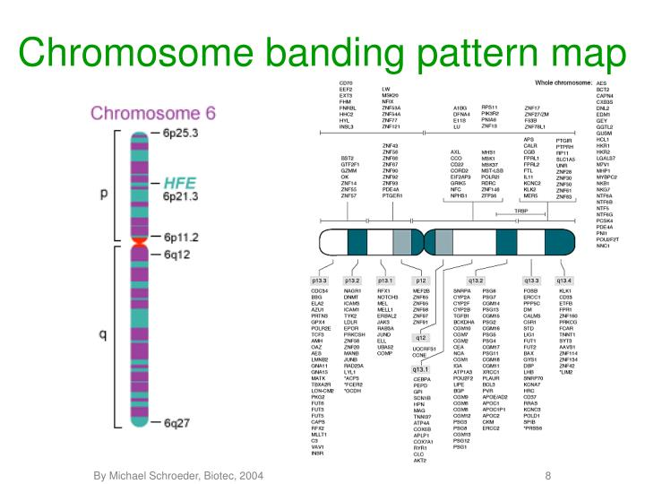 Chromosome banding pattern map