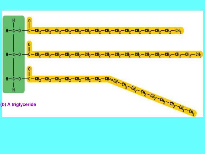 (b) A triglyceride