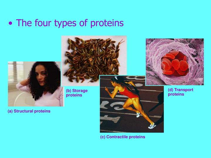 (d) Transport proteins
