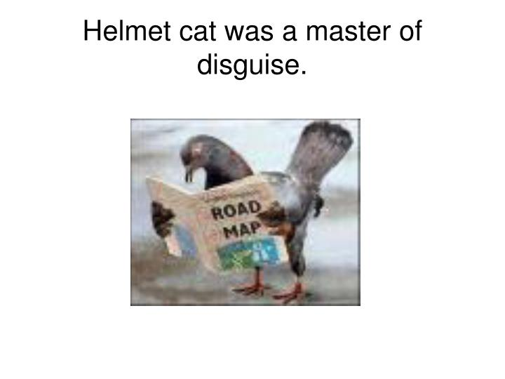 Helmet cat was a master of disguise.