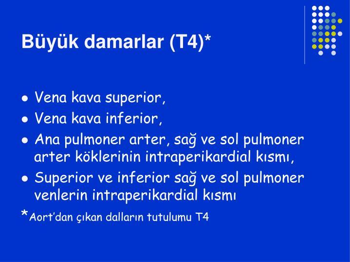 Büyük damarlar (T4)*