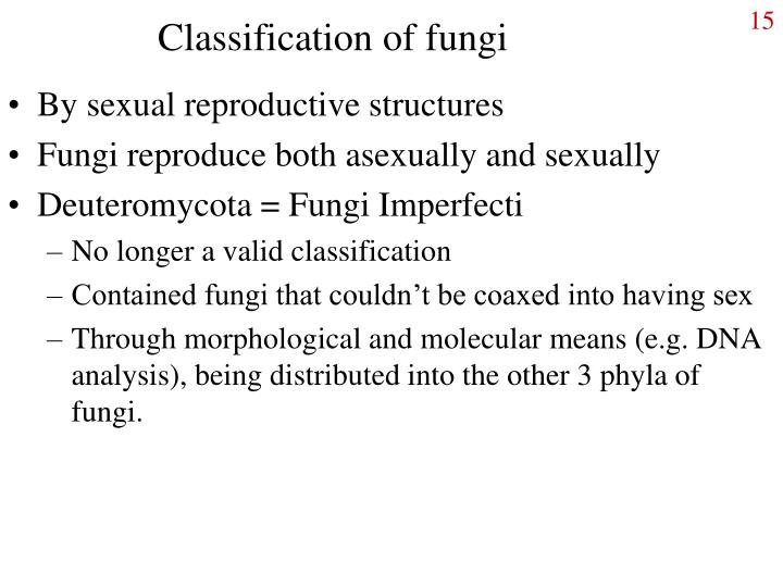 Classification of fungi