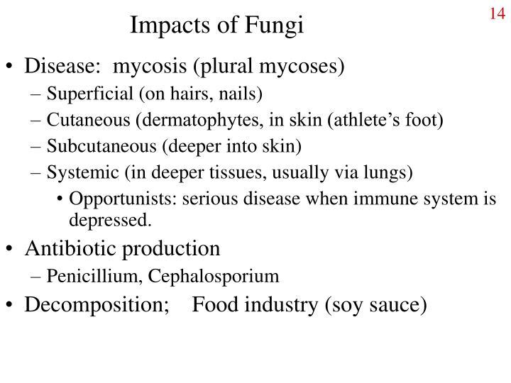 Impacts of Fungi