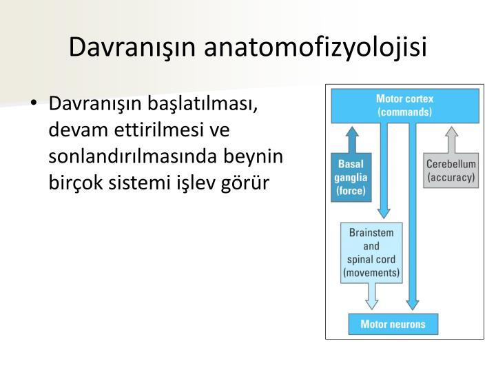 Davranışın anatomofizyolojisi