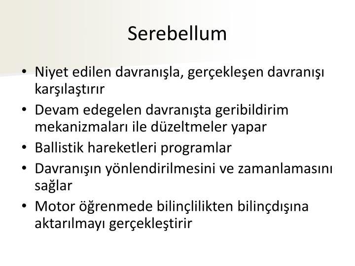 Serebellum