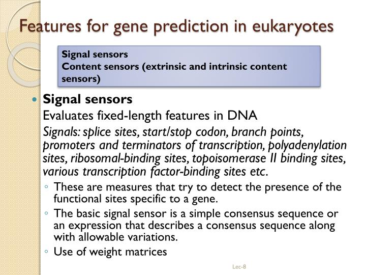 Features for gene prediction in eukaryotes