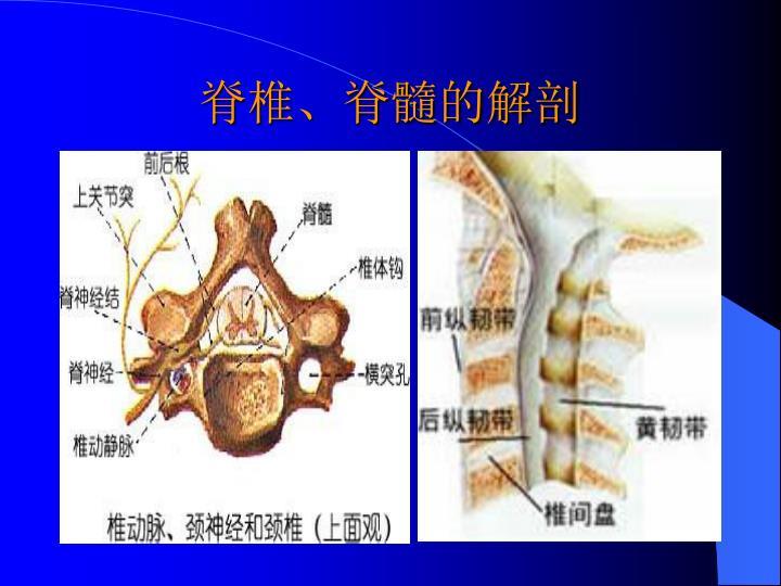 脊椎、脊髓的解剖