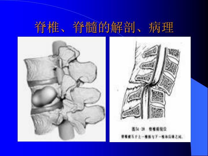 脊椎、脊髓的解剖、病理
