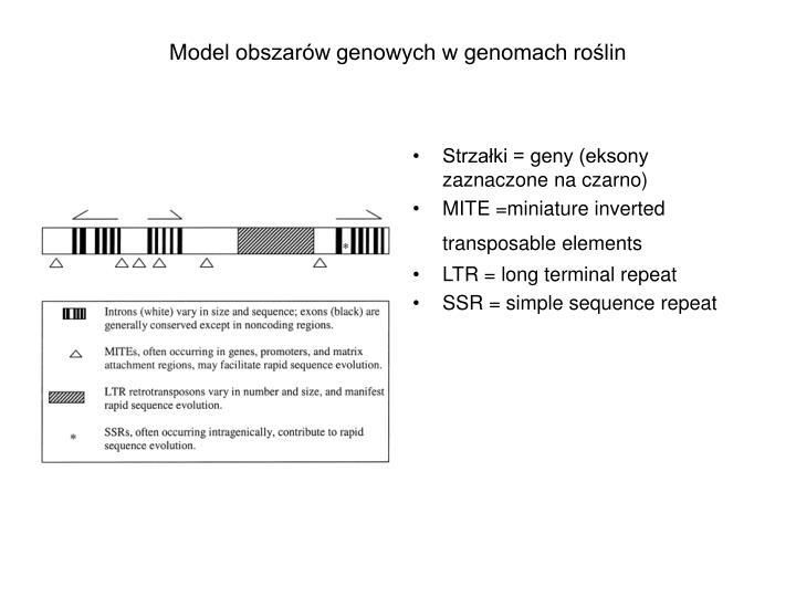 Model obszarów genowych w genomach roślin