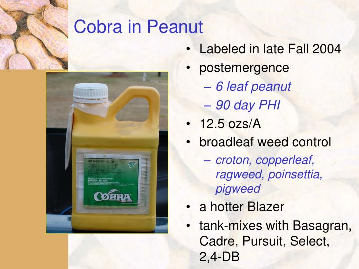 Cobra in Peanut