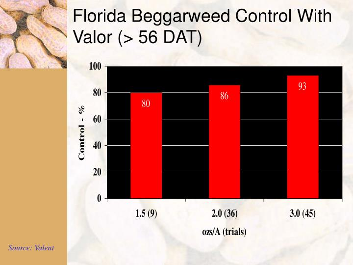 Florida Beggarweed Control With Valor (> 56 DAT)