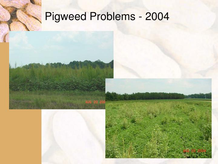 Pigweed Problems - 2004