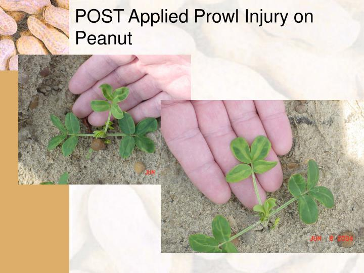 POST Applied Prowl Injury on Peanut