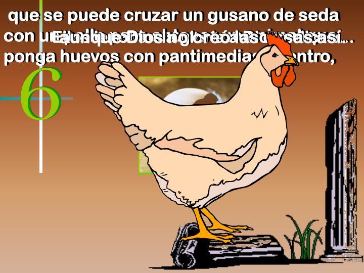 que se puede cruzar un gusano de seda con un pollo para obtener un animal que ponga huevos con pantimedias adentro,