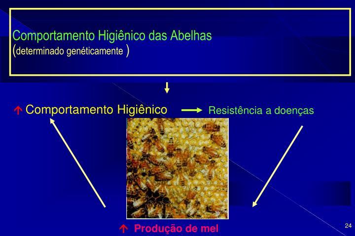 Comportamento Higiênico das Abelhas