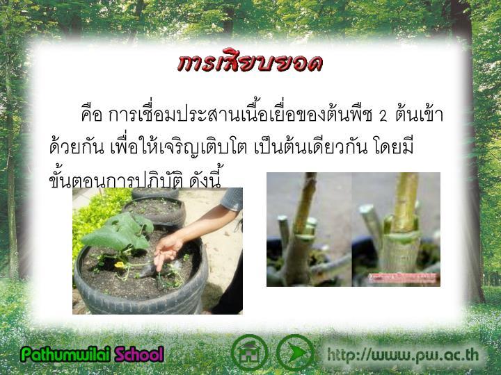คือ การเชื่อมประสานเนื้อเยื่อของต้นพืช