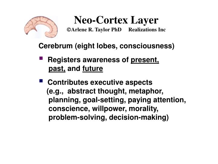 Neo-Cortex Layer