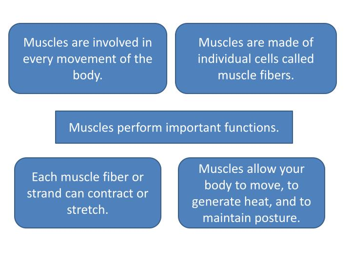 Muscles are involved in every movement of the body.