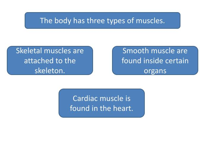 The body has three types of muscles.