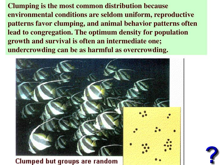 Clumping is the most common distribution because environmental conditions are seldom uniform, reproductive patterns favor clumping, and animal behavior patterns often lead to congregation. The optimum density for population growth and survival is often an intermediate one; undercrowding can be as harmful as overcrowding.