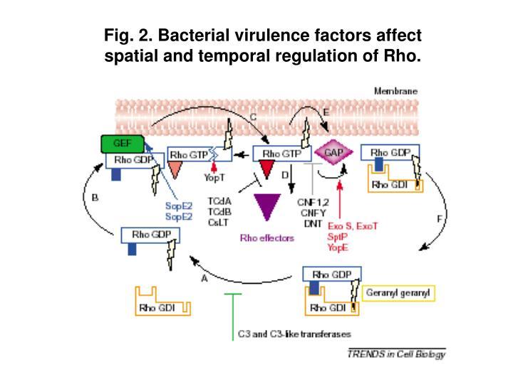 Fig. 2. Bacterial virulence factors affect