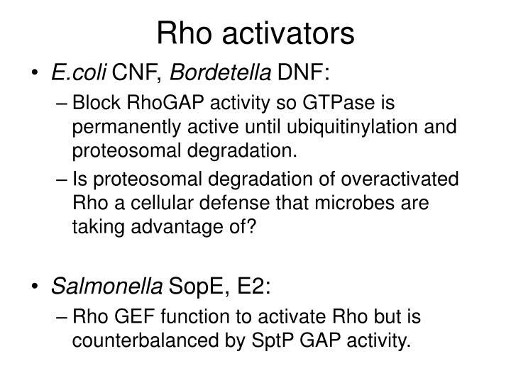 Rho activators