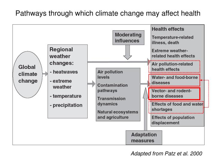 Pathways through which climate change may affect health