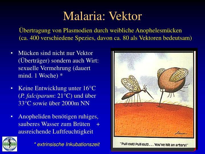 Malaria: Vektor