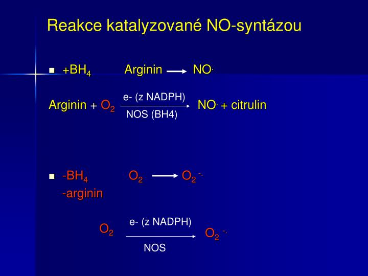 Reakce katalyzované NO-syntázou