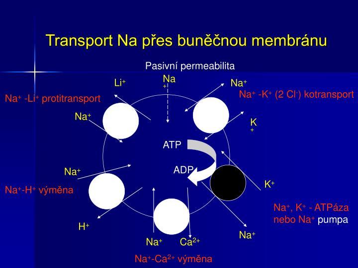Transport Na přes buněčnou membránu