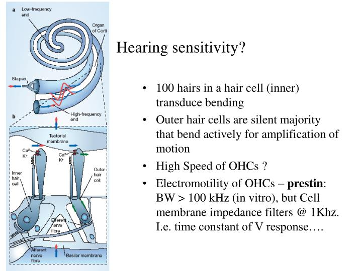 Hearing sensitivity?