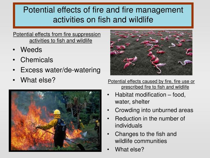Potential effects from fire suppression activities to fish and wildlife