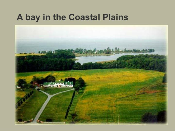 A bay in the Coastal Plains