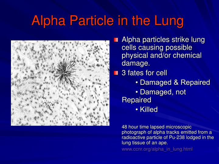 Alpha Particle in the Lung