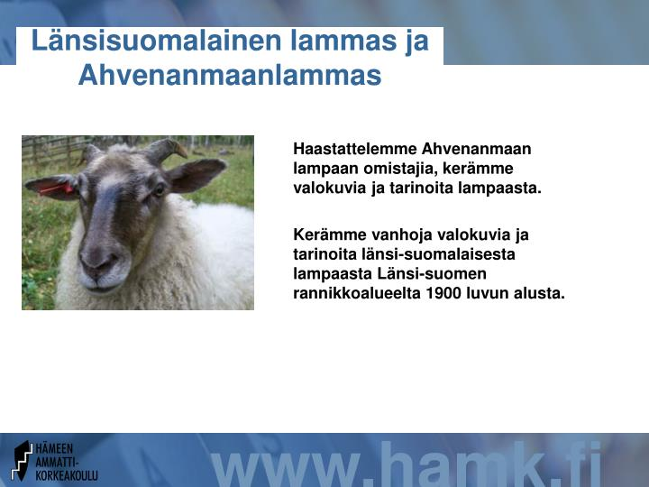 Länsisuomalainen lammas ja Ahvenanmaanlammas