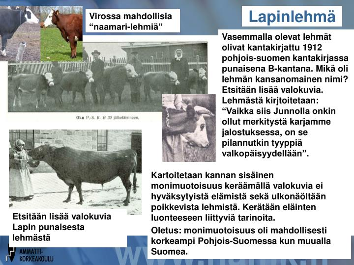 """Virossa mahdollisia """"naamari-lehmiä"""""""