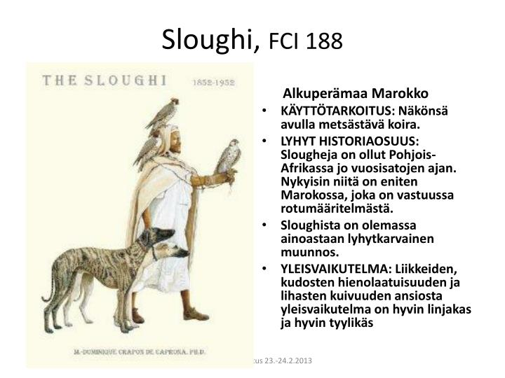 Sloughi fci 188
