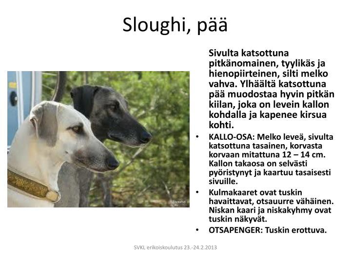 Sloughi, pää