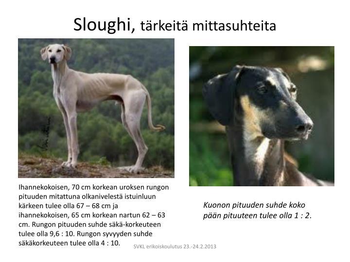 Sloughi