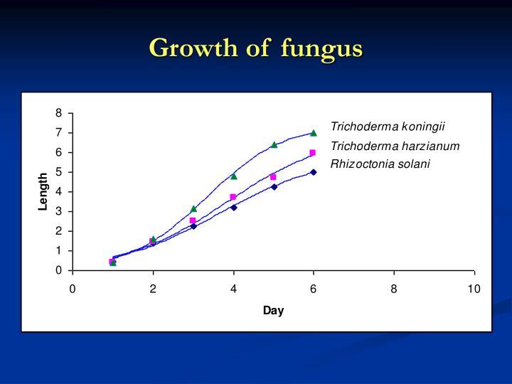 Growth of fungus