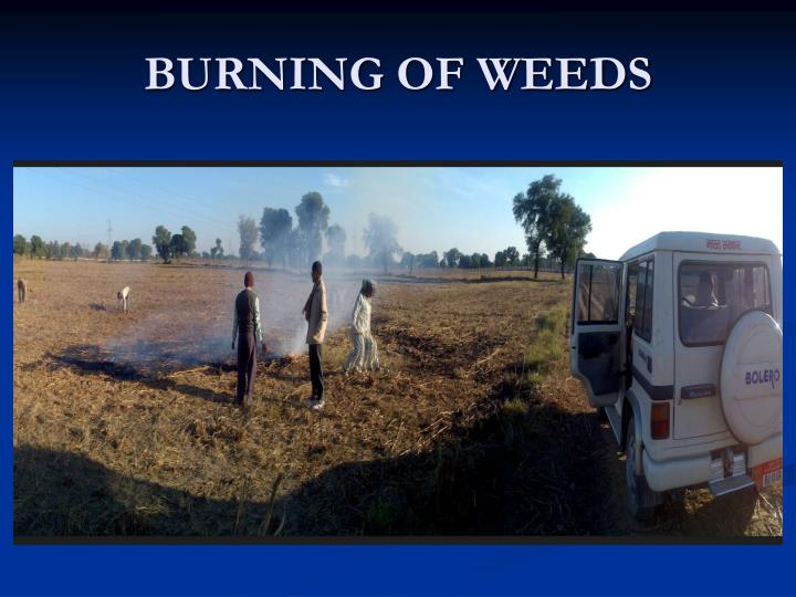 BURNING OF WEEDS
