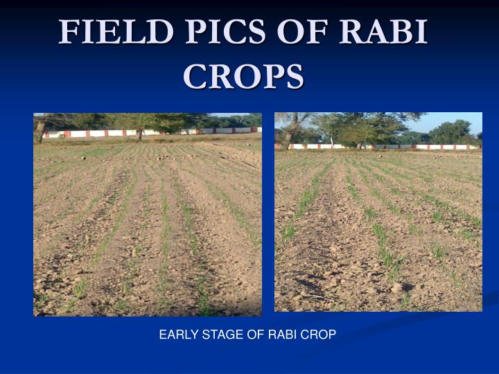 FIELD PICS OF RABI CROPS