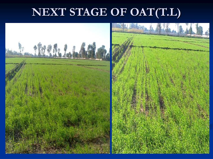 NEXT STAGE OF OAT(T.L)