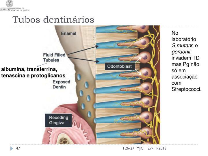 Tubos dentinários