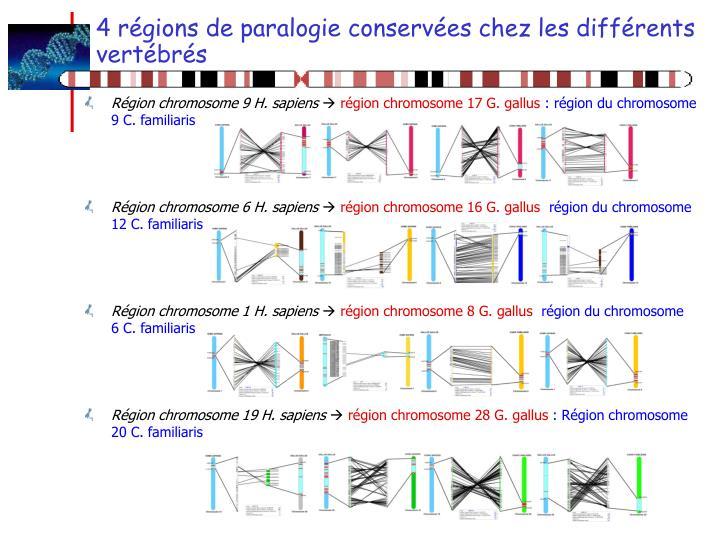 4 régions de paralogie conservées chez les différents vertébrés