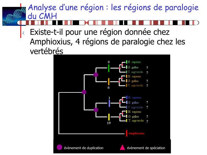 Analyse d'une région : les régions de paralogie du CMH