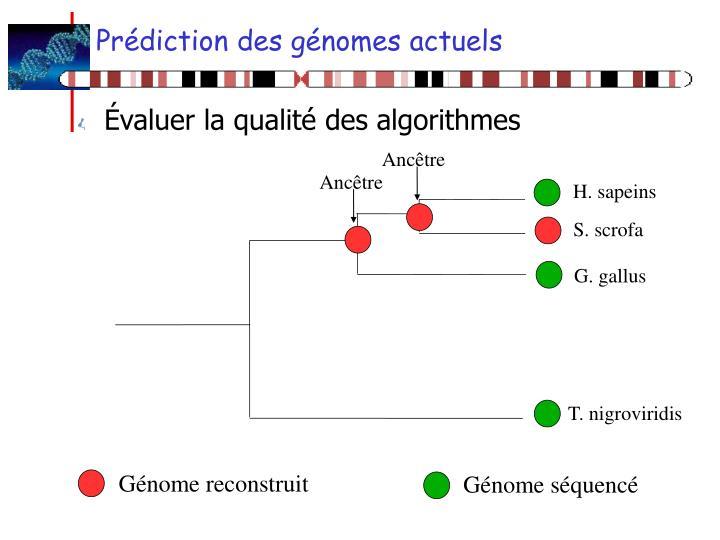 Prédiction des génomes actuels